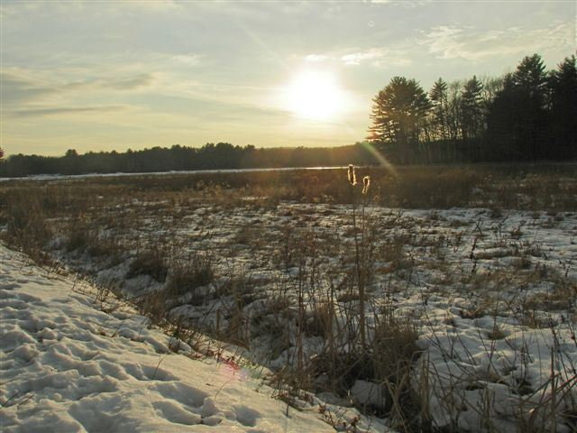 Cranberry Bog in the Winter